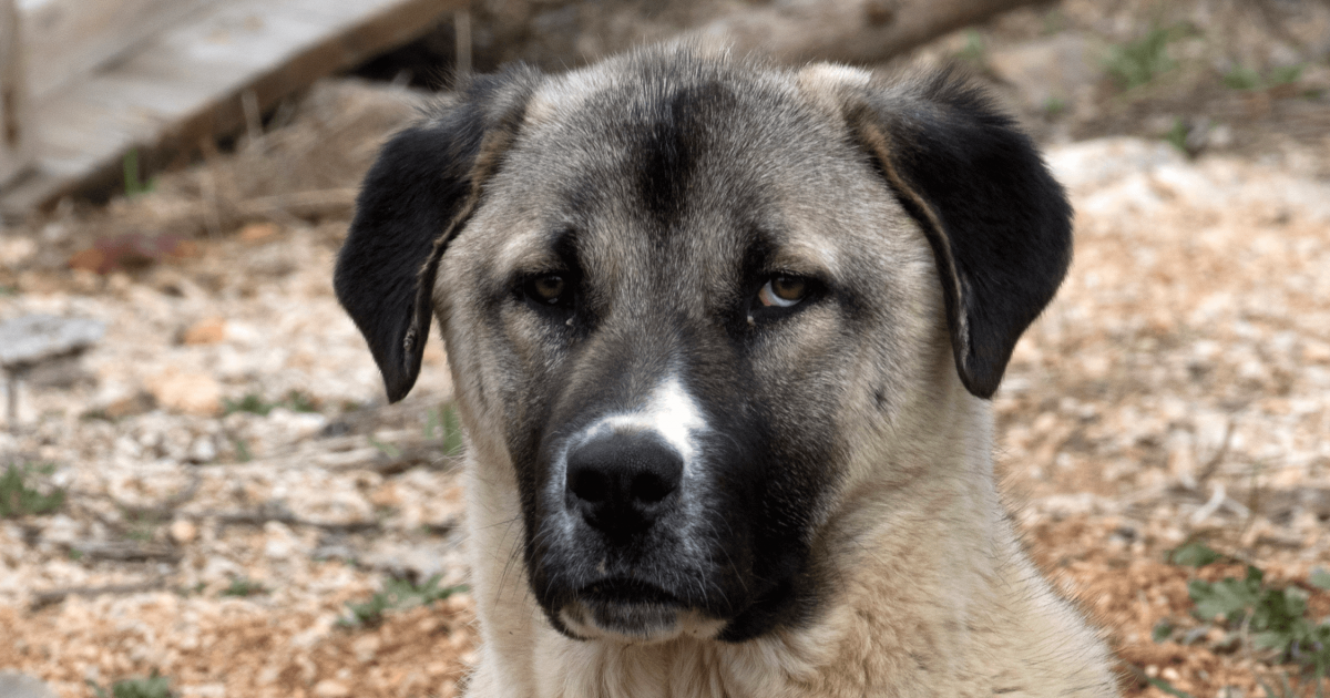 dog rehoming centers