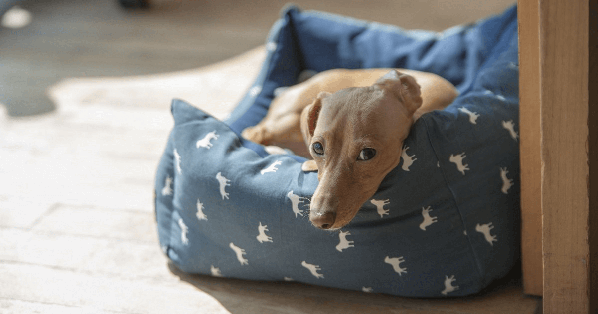 Indestructible Material For Dog Bed