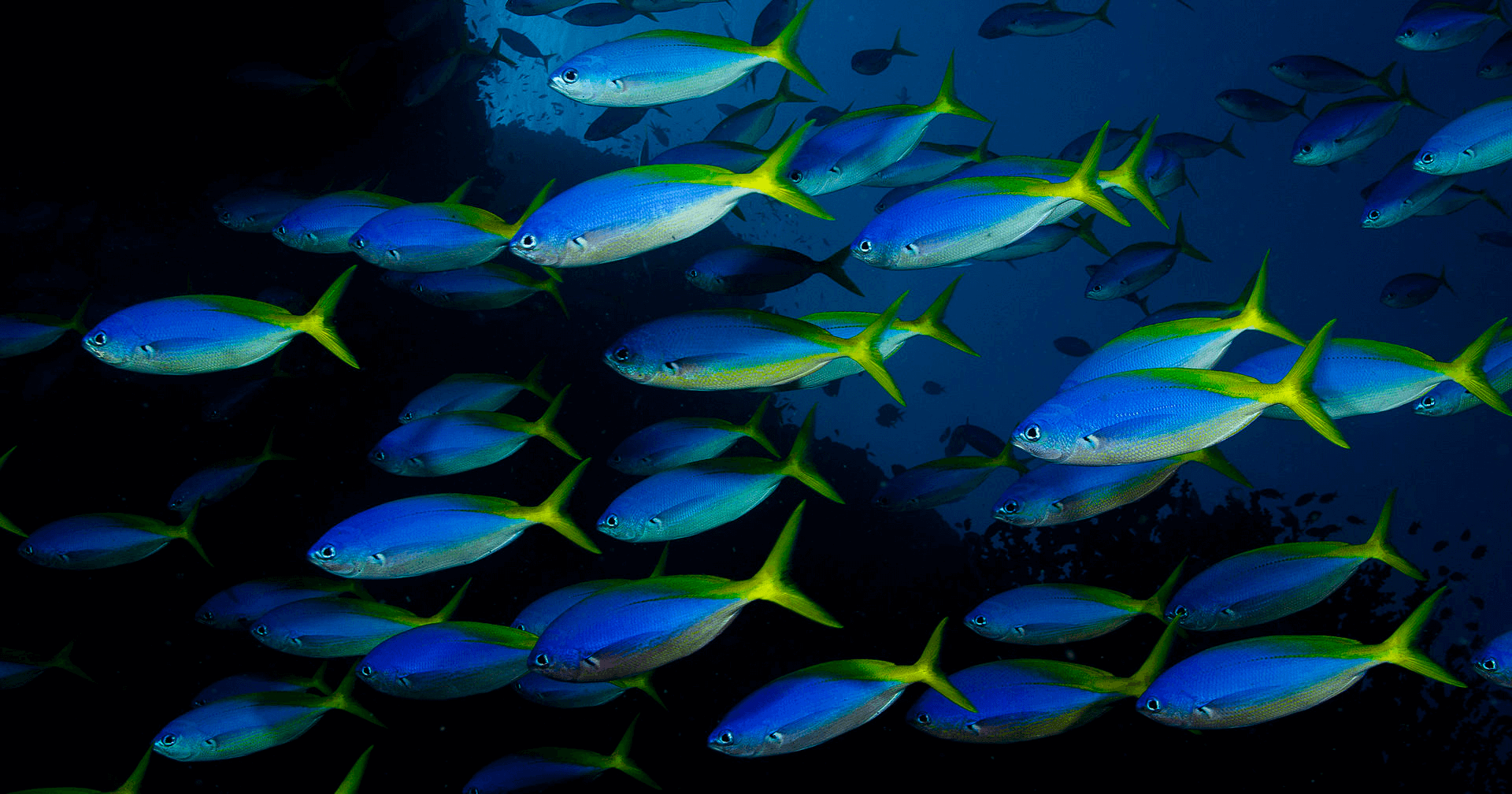 tropical fish information